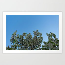 sky blossoms Art Print