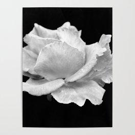 White Rose On Black Poster