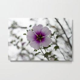 Blooming Tree Mallow Metal Print