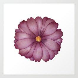 Magenta Daisy Art Print