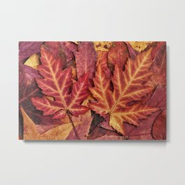 Colorful Autumn Maple Leaf Indian Summer Red Metal Print