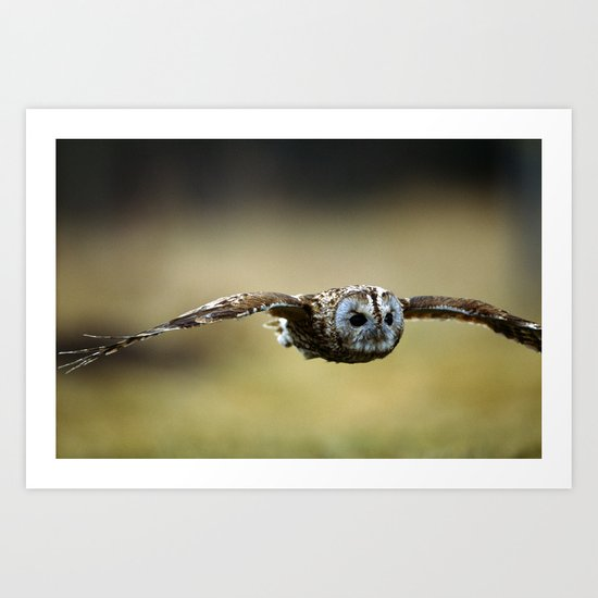 FLIGHT OF THE TAWNY OWL Art Print