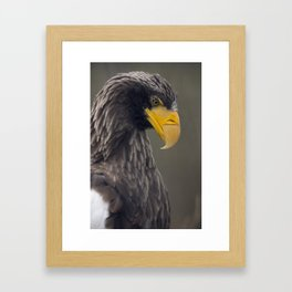 Sea ​​eagle profile portrait Framed Art Print
