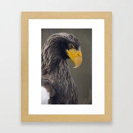 Sea eagle profile portrait Framed Art Print
