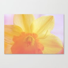 The dream of the yellow flower Canvas Print