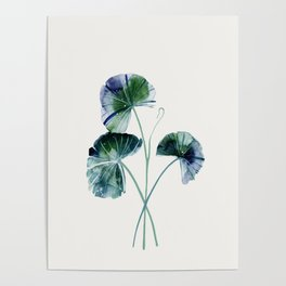 Water lily leaves Poster