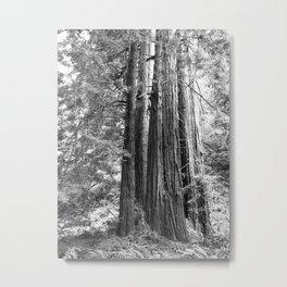 muir woods #2 Metal Print