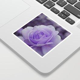 Lavender Rose 2 Sticker