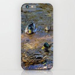 Mallard Pairs iPhone Case