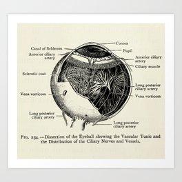 Vintage Anatomy The Human Eyeball Art Print