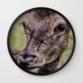 Gaze Of A Young Hart Wall Clock