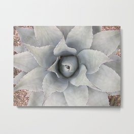 White Agave Metal Print