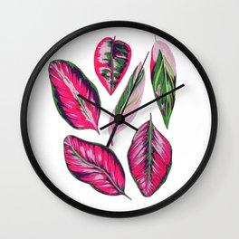 Calathea pink leaves Wall Clock