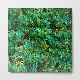 Acacia leaves Metal Print