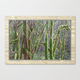 YOUNG RAINFOREST VINE MAPLES Canvas Print