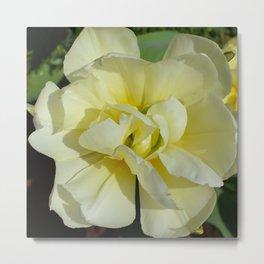 Double Cream Tulip by Teresa Thompson Metal Print