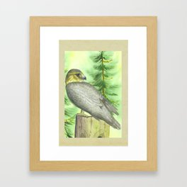 Merlin Falcon Framed Art Print