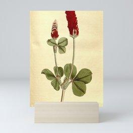Flower 328 trifolium incarnatum Crimson Trefoil19 Mini Art Print
