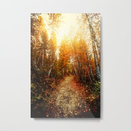 Red Forest, Washington in November Metal Print