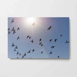 Flock of birds flying against blue sky and bright sun Metal Print