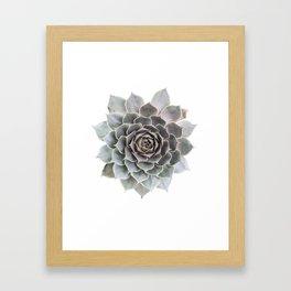Succulent burst Framed Art Print