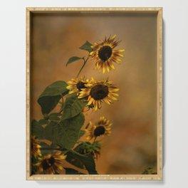 Origin Of Sunflowers  Serving Tray