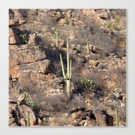 Watercolor Cactus, Saguaro 14, Ventana Canyon, Arizona, Lone Cliffside Saguaro Canvas Print