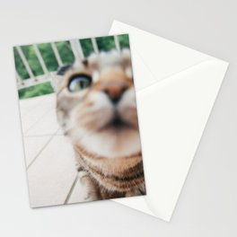 Curious Cat Stationery Cards