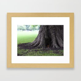 Cambridge tree 3 Framed Art Print