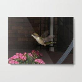 Patio hummingbird 8 Metal Print
