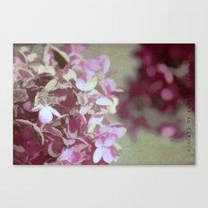 Hydrangeas No. 4 Canvas Print