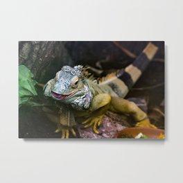 Reptile. Metal Print