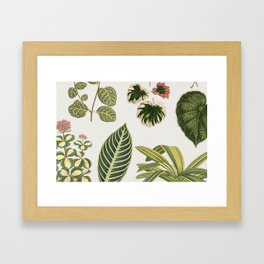 Botanical Green Plants Watercolor Painting Framed Art Print