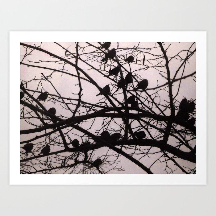 Birds Silhouettes Art Print