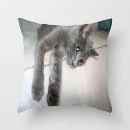 Russian Grey Cross Tabby Cat  Throw Pillow