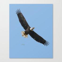 Eagle Wings Canvas Print