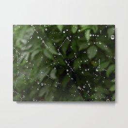 Web dew Metal Print