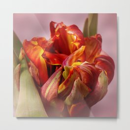 Tulip yellow and red colored Metal Print
