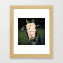 The Goat II Framed Art Print