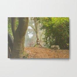 Squirrel Standing on Stump Metal Print