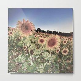 """Sunflowers"" Vintage summer.... Metal Print"