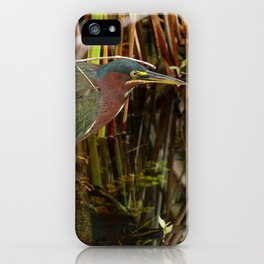 Beautiful Green Heron iPhone Case