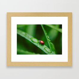 Small Worlds Framed Art Print