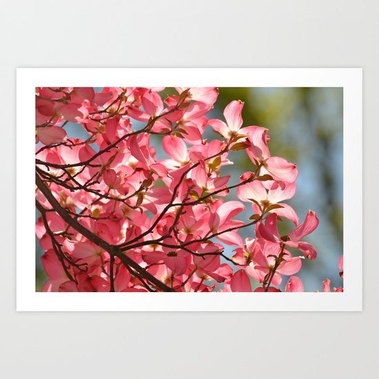 Pink Dogwood Flower Art Print