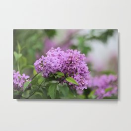 Lilac Bouquets Metal Print
