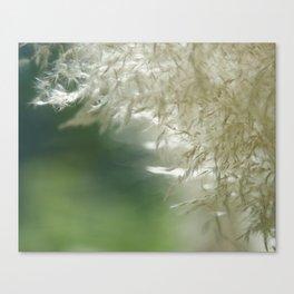 Wispy over green Canvas Print