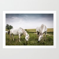 Horses grazing in a country of northern Europe Art Print
