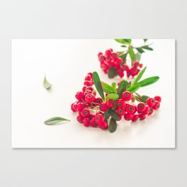 Red fruit Canvas Print
