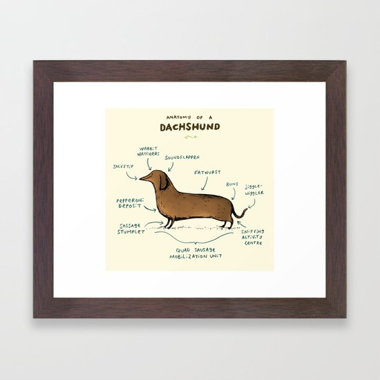 Anatomy of a Dachshund by sophiecorrigan