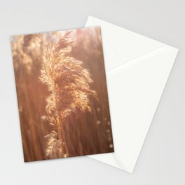 Nature Photography. Natural Pampas in Europe. Calm Photo Print.  Stationery Cards